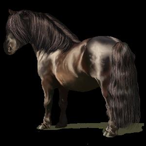 Pony Shetlander Bruine Tobiano