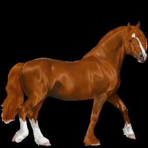 Pony Quarter Pony Apfelschimmel