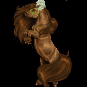 Poník Connemara Tmavý hnědák