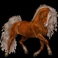 Pony Connemara Kastanje