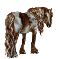 Riding Horse Argentinean Criollo Black Spotted Blanket