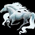 Jezdecký kůň Anglický plnokrevník Cremello