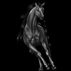 Jezdecký kůň Arabský plnokrevník Červený bělouš