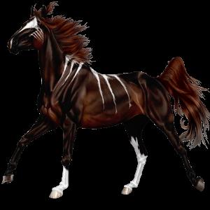 Riding Horse Quarter Horse Strawberry roan