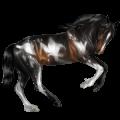 Riding Horse Paint Horse Chestnut Tovero