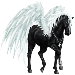 Riding pegasus Quarter Horse Black