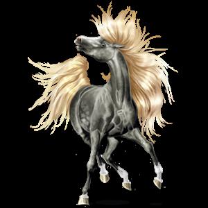 Koń wierzchowy Kłusak francuski Kara