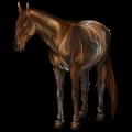 Cheval de selle Quarter Horse Cremello