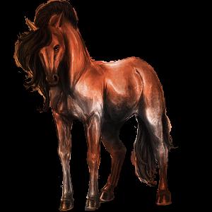 Cavalo de passeio Cavalo Árabe Preto