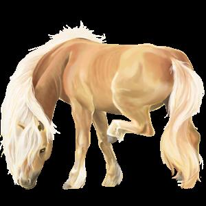 Pony Deutsches Reitpony Fuchs mit heller Mähne