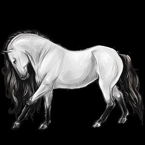 Pony Australian Pony Bay