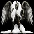 Rijpaard-pegasus Akhal-Teke Donkerbruin