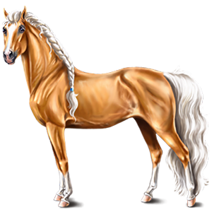 Cal de călărit Pursânge Arab Negru