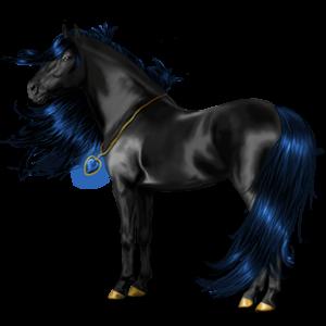 Riding Horse Standardbred Roan