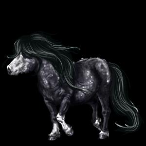 Ponny Shetlandsponny Brun
