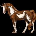 Riding unicorn Paint Horse Chestnut Overo