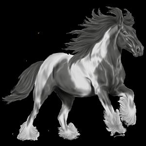 Riding Horse Vanner Black Tobiano