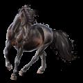 Riding Horse Akhal-Teke Flaxen Liver chestnut