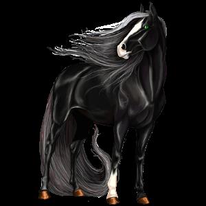 Riding Horse Paint Horse Dun Tobiano