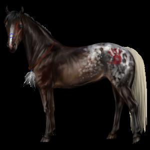 Cavalo de passeio Cavalo Árabe Alazão tostado crinalvo
