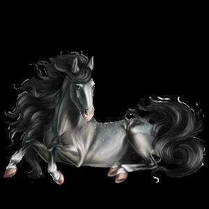 Riding Horse Shagya Arabian Mouse Gray