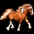 Pony Quarter Pony Palomino Tobiano