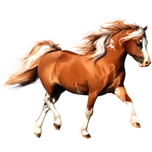 Pegasus Connemara Flaxen Liver chestnut