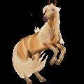 Cavalo de passeio Alazão tostado