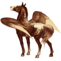 Riding pegasus Appaloosa Few Spots