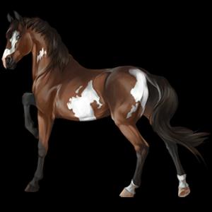 Cal de călărit Pursânge Arab Murg