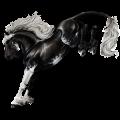 Cheval de selle Paint Horse Pie Tobiano Isabelle