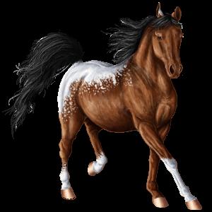 Riding Horse Paint Horse Bay Overo