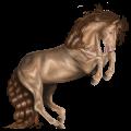 Pony Newfoundland Pony Dun