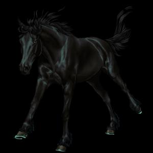 Riding Horse KWPN Bay