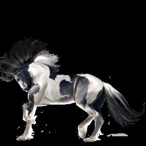 Riding Horse Nokota Roan