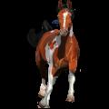 Riding Horse Arabian Horse Dark Bay