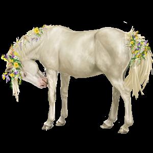 Pony Welsh Light Grey