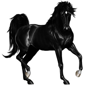 Верховая лошадь Ахалтекинская Вороная