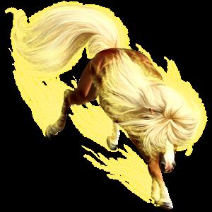 Ponny Connemara Svart