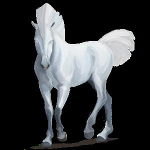 Кон за езда Арабски кон Сив пъстър