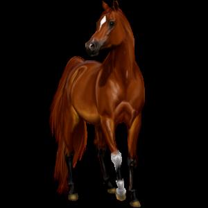 Pegasus-Reitpferd Shagya-Araber Apfelschimmel