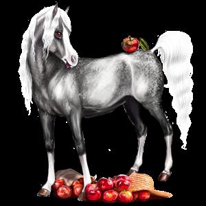 Ridhäst Renrasig spansk häst Apelgrå
