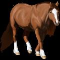 Pegasus Tinker Muisgrijze Tobiano