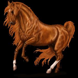 Riding Horse KWPN Chestnut