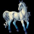 Koń wierzchowy Koń luzytański Skarogniada