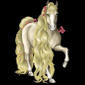 Koń wierzchowy Koń andaluzyjski Siwa Jabłkowita
