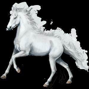 Riding Horse Lipizzan Dapple Grey
