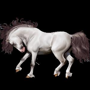 Pony Highland Pony Black