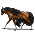 Riding Horse Knabstrupper Bay Snowflake