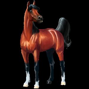 Pegasus-Reitpferd Araber Dunkelbrauner